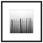 The Fishing Poles
