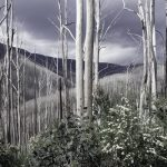 Echoes of the Gums (Bushfire Charity Print)