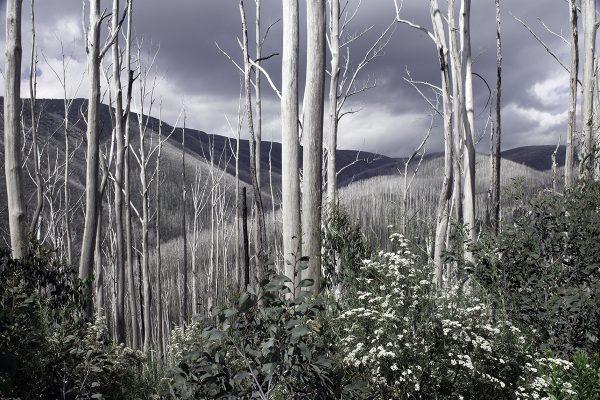 Echoesofthegumtrees 600x400