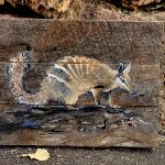 My backyard – Numbat