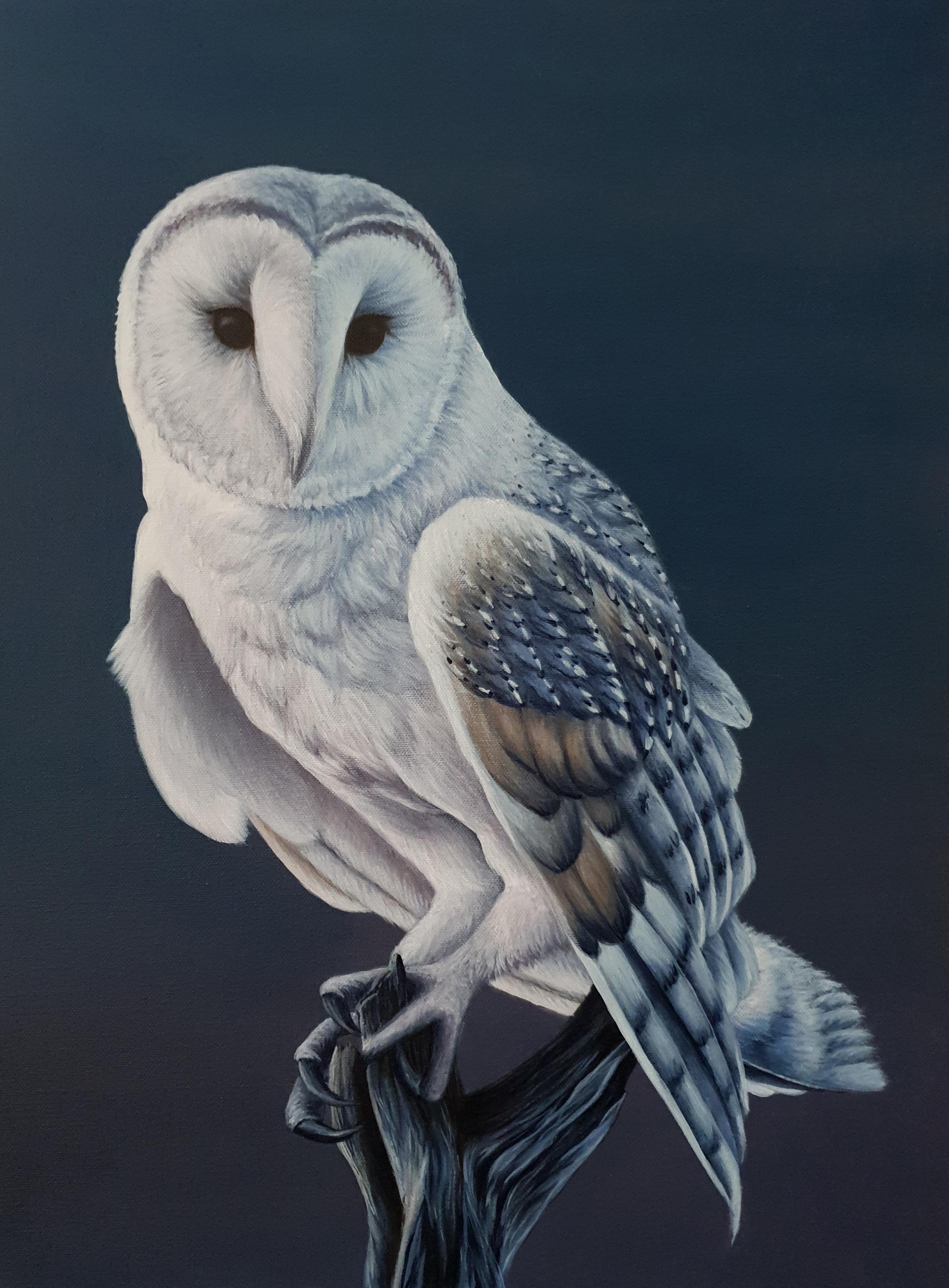 Owl Painting White Barn Owl