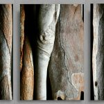 Tree Bark Triptych