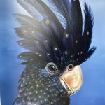 Black Cockatoo