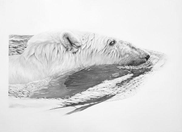 Polar Copy 2