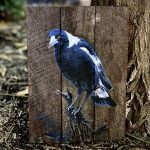 My backyard – Magpie