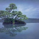 Wild Bonsai – Chinese Elm