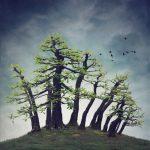 Wild Bonsai – Montezuma Bald Cypress