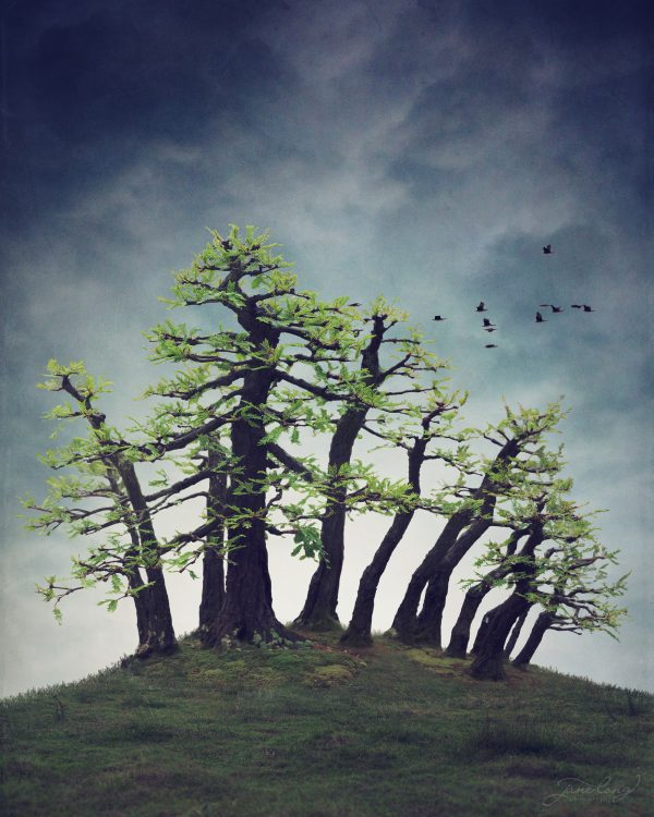 Wb Montezuma Bald Cypress