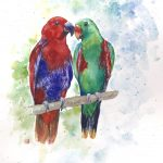 "Australian Parrots ""Just Say'n"""