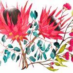 Eucalyptus and Proteas