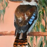Kookaburra – Flora and Fauna Series