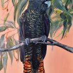 Black Cockatoo – Flora and Fauna Series