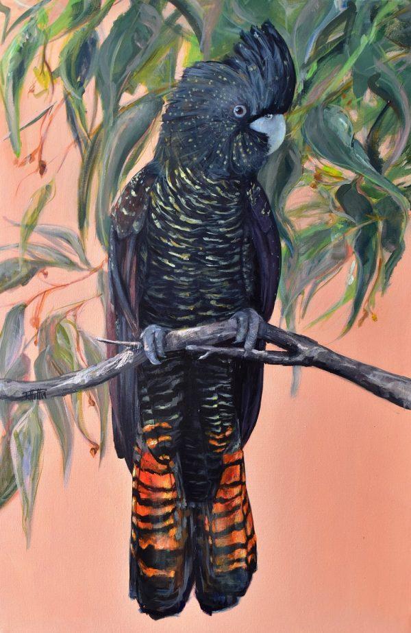 Flora Ans Fauna Black Cockatoo