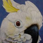 Cockatoo portrait Ltd Ed giclee print