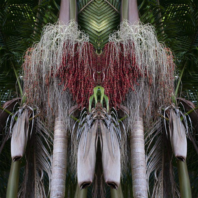 Palm Praise 1024x1024