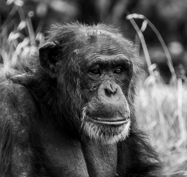Pondering Farrimond Mono A