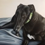 Fred the Greyhound