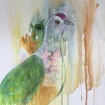 Dove of colour
