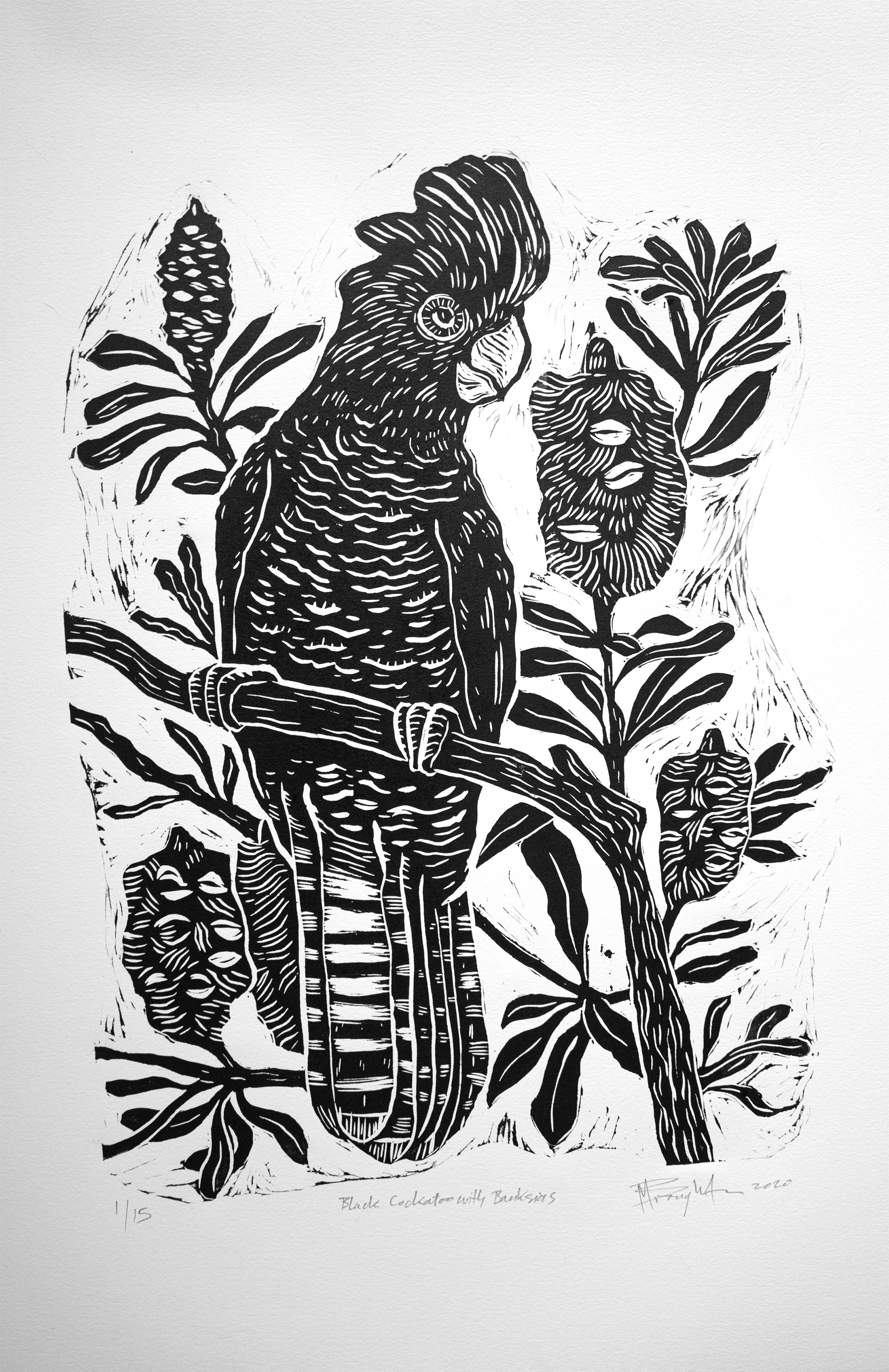 Black Cockatoo With Banksias 1a