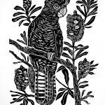 Black Cockatoo with Banksias