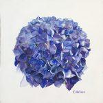 Hydrangea Blossom Blue