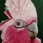 Dont be a galah stay home Ltd Ed giclee print