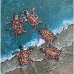 Emerging Baby Turtles