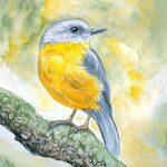 Yellow Robin
