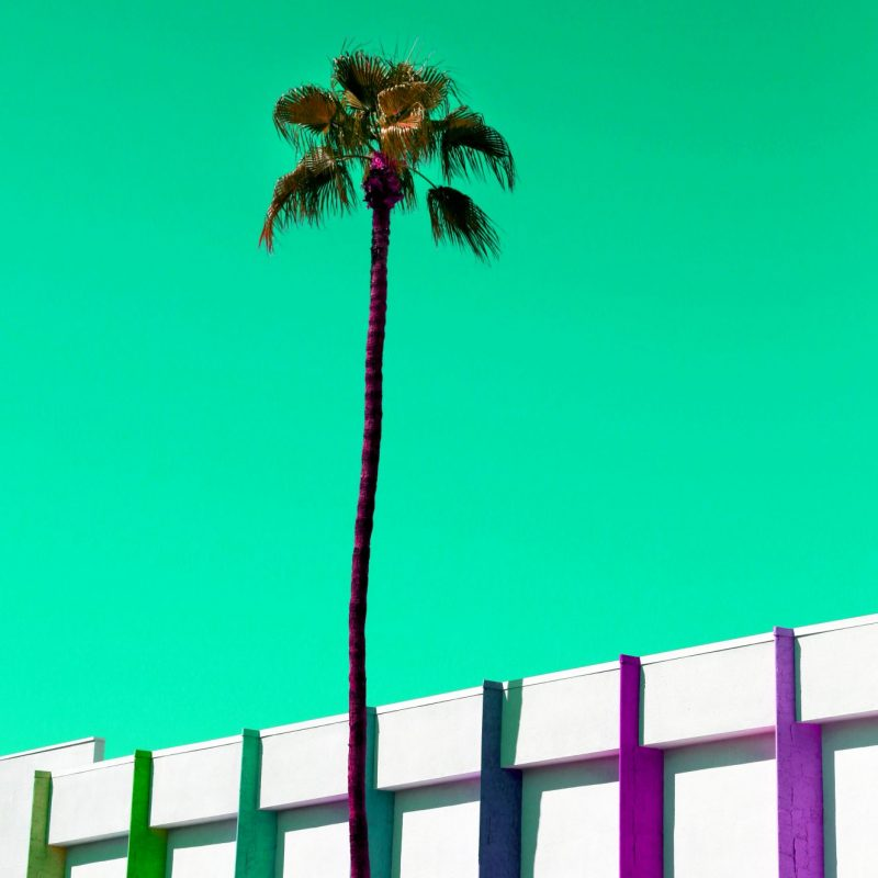 Palm Springs Palms Stripes 800x800 (2)