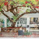 Poinciana Hastings Street Ltd Ed Print
