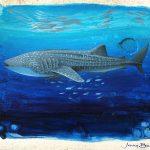 Ocean Soul  Whaleshark