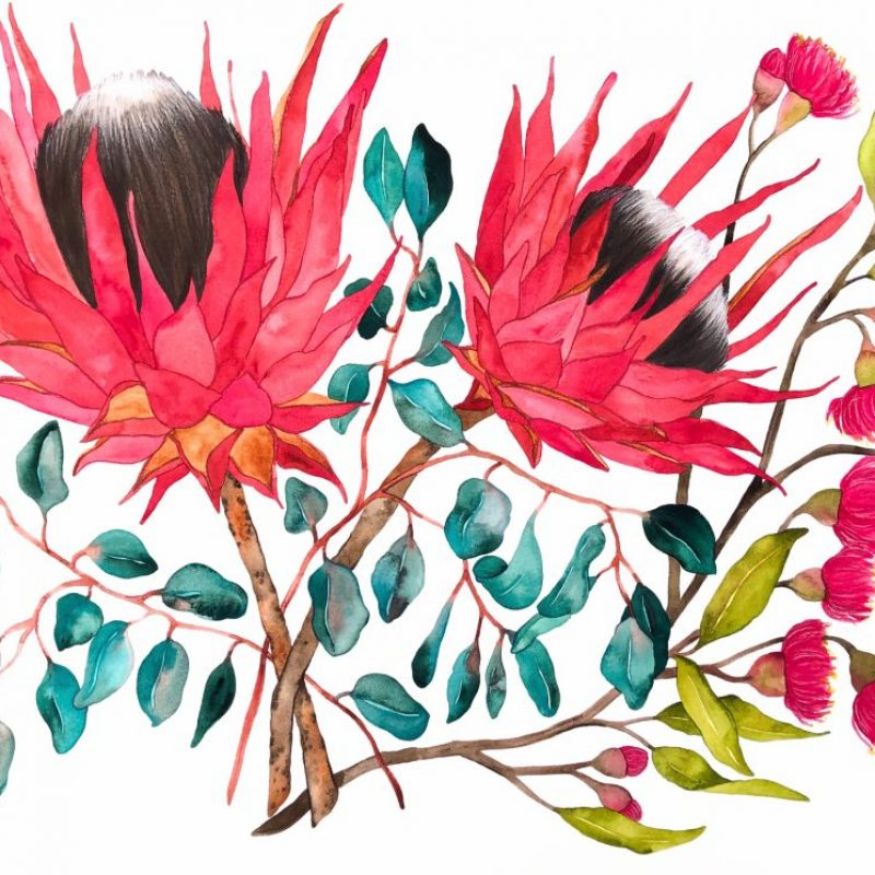Eucalyptus And Proteas Kirsty Anderson
