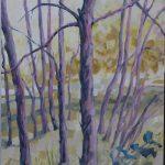 Wattle on the Slope
