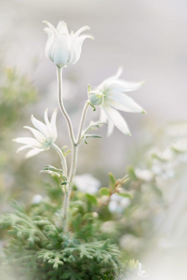 White Flannel Flower Dance P3