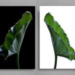 Calla Lily Leaves Diptych ~ Botanical 2 Print Set