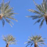 Four Palms (Unframed | Ltd. Edition Print)