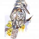 Kookaburra Colour Ltd Ed Print