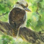 Kookaburra's Morning Watch