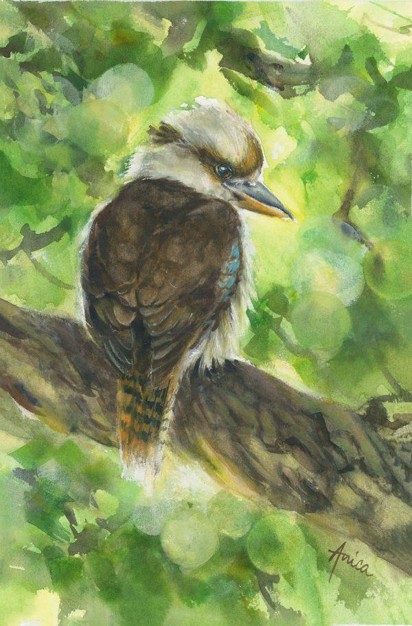 Kookaburras Morning Watch
