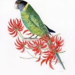 Ringneck parrot in the coral tree