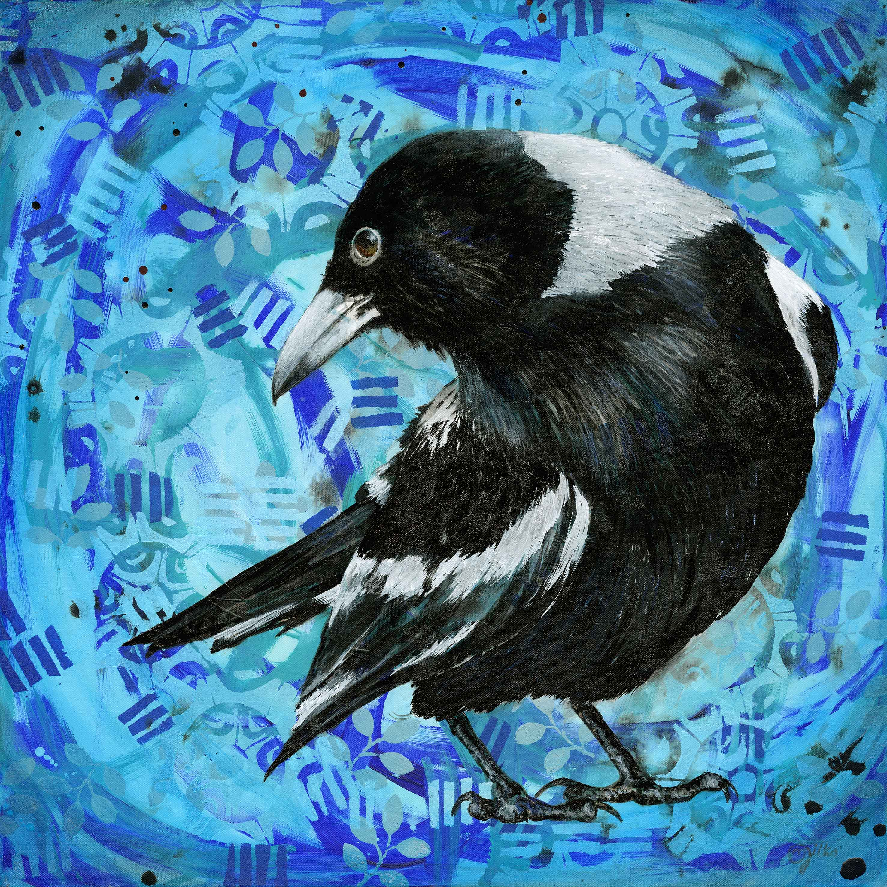 Magpie Looking Back Lower Res