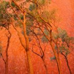 Outback Orange (Ltd. Edition Print)