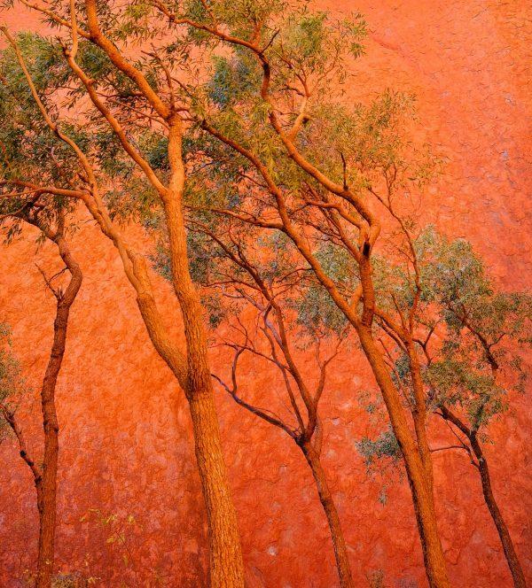 Outback Orange 600x664