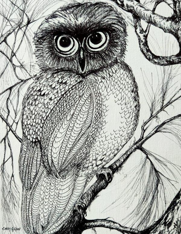 Owl In Pen