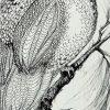 Owl In Pen Crop