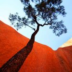 Uluru Tree (Ltd. Edition Print)