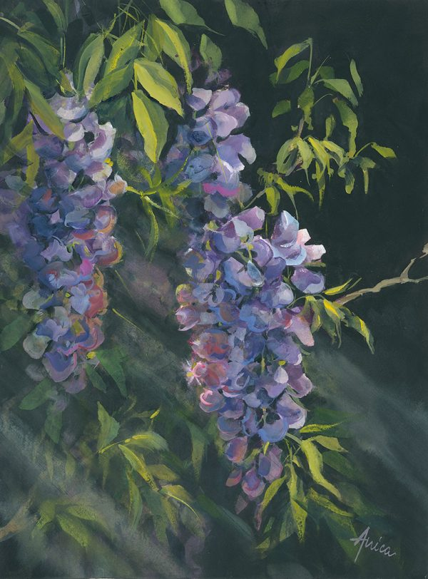 Wisteria By Moonlight New