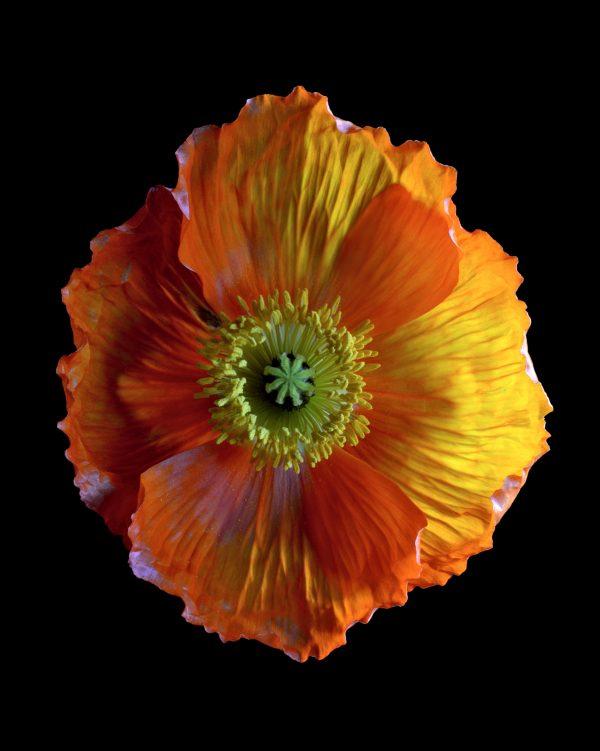 Orangepop1620