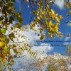 Photo For Autumn Sky Painting