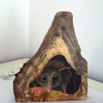 Australian Possum in tree, Hand-painted sculpture on camphor laurel